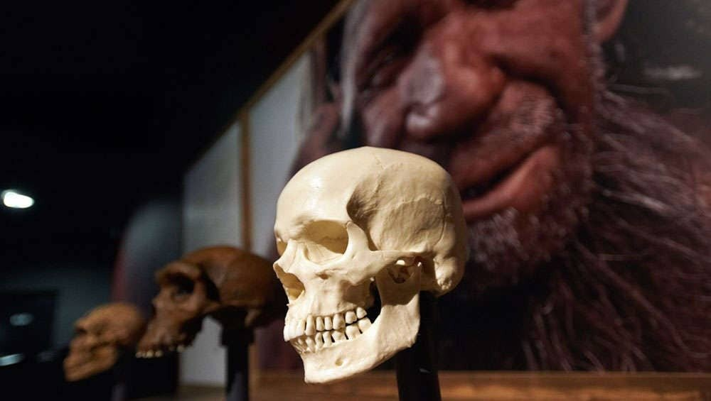 """Neanderthals could talk, and it wasn't the """"Ooga Booga"""" you were expecting"""