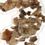 Israeli experts uncover Dead Sea Scrolls for first time in 60 years: The significance of the find, explained
