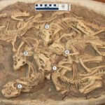 Brief length of the Yixian Formation and 'Chinese language Dinosaur Pompeii'