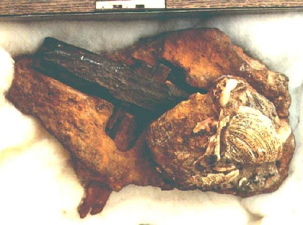 400 Million Year Old Hammer