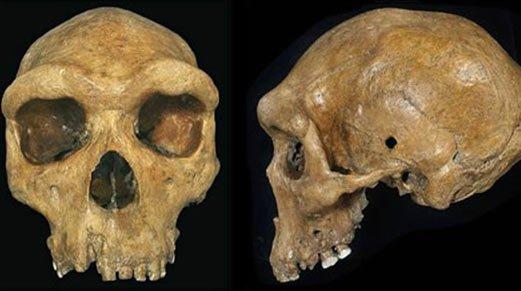 Prehistoric Skulls with Bullet-Like Holes