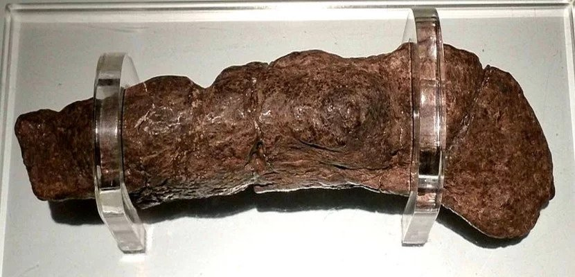This is the largest fossilized human turd ever found