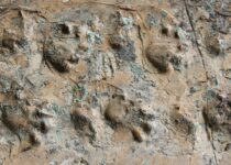 Scientists discover 280-million-year-old fossil tracks in remote area of the Grand Canyon