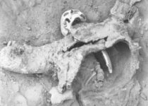 Archaeological Evidence for 1,700-Year-Old Chemical Warfare