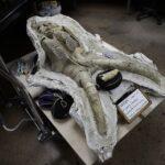 Subway palaeontology: LA construction unearths fossil trove