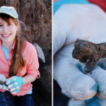 Archeologists Find Long-Lost Biblical City and Rare Figurine of Canaanite God Baal