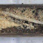 Archaeologists Open Frozen Wooden Box Found on Viking Mountain Pass
