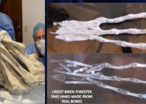 Three-fingered 'alien mummy' dug up in Peru could be new species of human, DNA test suggests