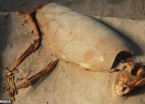Graves of nearly 600 cats and dogs in ancient Egypt may be world's oldest pet cemetery