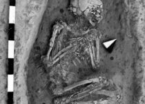 Researchers use genetic and isotopic data to investigate human mobility at Bronze Age city of Alalakh