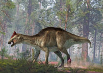 A tumor in the foot and a fracture in the two tails complicated the life of this hadrosaurus.