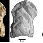 A 51,000-year-old carved bone is one of the world's oldest works of art, researchers say