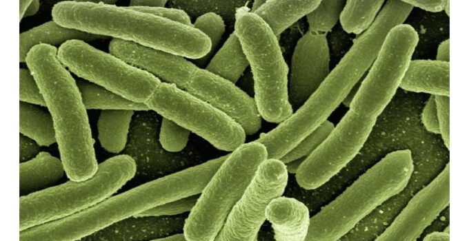 Archaeology Uncovers Infectious Disease Spread – 4000 Years Ago