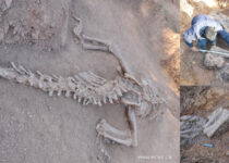 180 million-year-old dinosaur fossils dug up in southern China