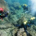 Amateur divers find an 'incredible' treasure trove of gold coins from the Roman Empire while cleaning up trash on the seabed